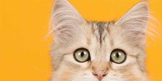 Hipoalerjenik Kedi Maması