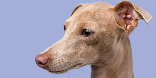 Hipoalerjenik Köpek Maması