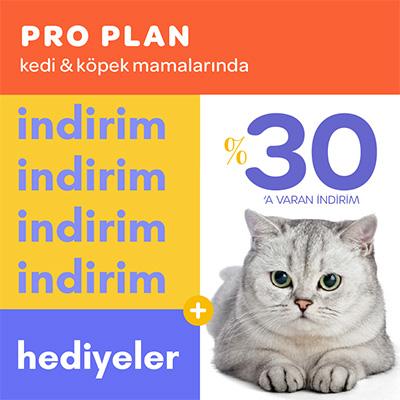 p.plan-cat+dog.png (67 KB)